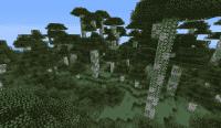Birch Jungle