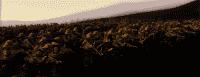 kingdoms_2014-07-01_16-05-09-29