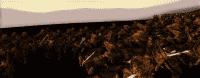 kingdoms_2014-07-01_16-06-47-57