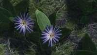 skyrim-hd-retekstur-cvetov 2