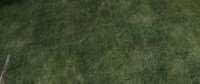 skyrim-4k-tekstury-travy