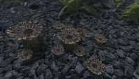 skyrim-replejser-kaktusov 2