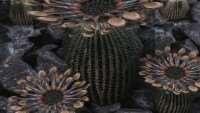 skyrim-replejser-kaktusov