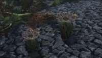 skyrim-replejser-kaktusov 3