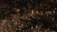 skyrim-sborka-tekstur-zemli-5