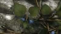 Skyrim — Реплейсер кустарников с ягодами