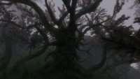 Skyrim - Дерево Деку