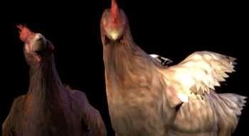 CSGO Chicken Ragdoll