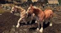 Skyrim — Реалистичный 2K текстуры для лошадей | Skyrim моды