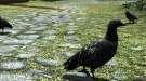 Skyrim — Новые птицы