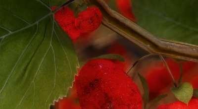 Skyrim — Реплейсер кустарников с ягодами | Skyrim моды
