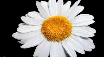 Skyrim — Качественный ретекстур всей флоры | Skyrim моды