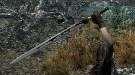Skyrim — новые текстуры одноручного серебряного меча