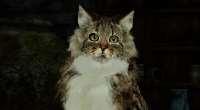 Dark Souls 2 — Tabby Shalquoir HD | Dark Souls 2 моды