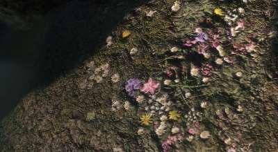 Skyrim — Параллакс текстуры земли и деревьев | Skyrim моды