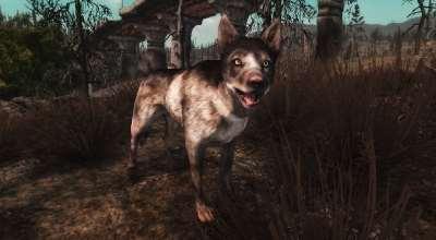 Fallout New Vegas — Это мир собак! Реплейсер | Fallout New Vegas моды